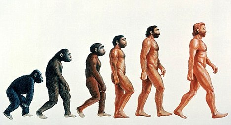 from ape to man